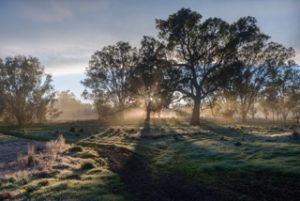a phot of the sunrise taken on a frosty morning